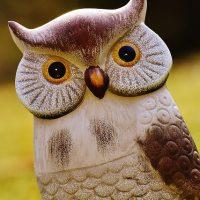 梟(owl)