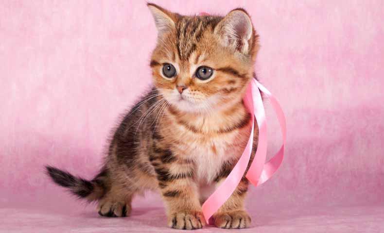 kitty / kittenの意味