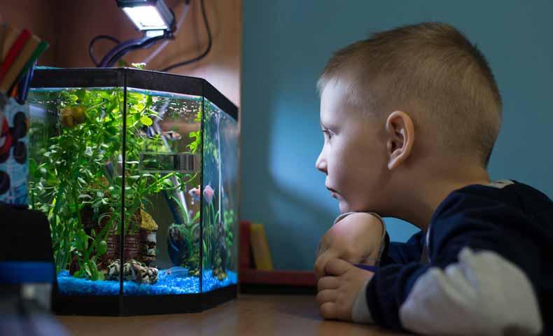 金魚・熱帯魚などの飼育