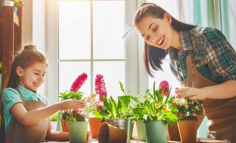 植物を栽培する