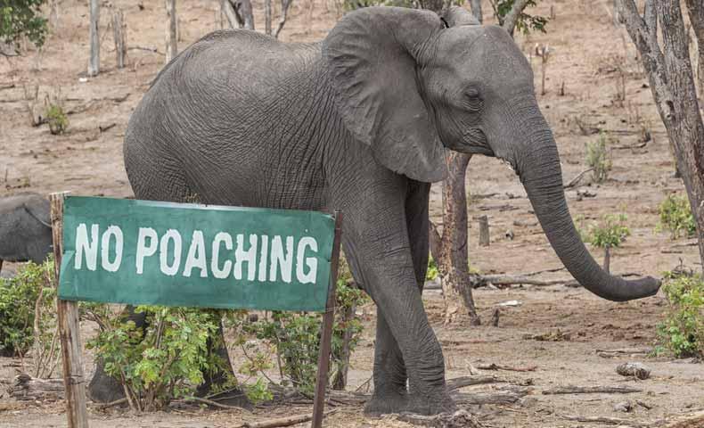 poachの意味と使い方