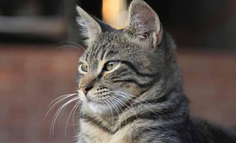 whisker(動物の髭)