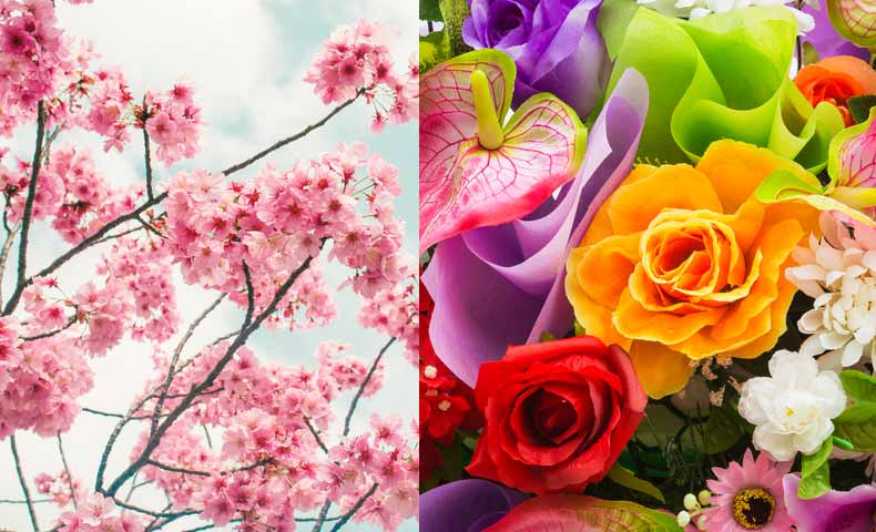 名詞でのblossom、bloom、flower違い