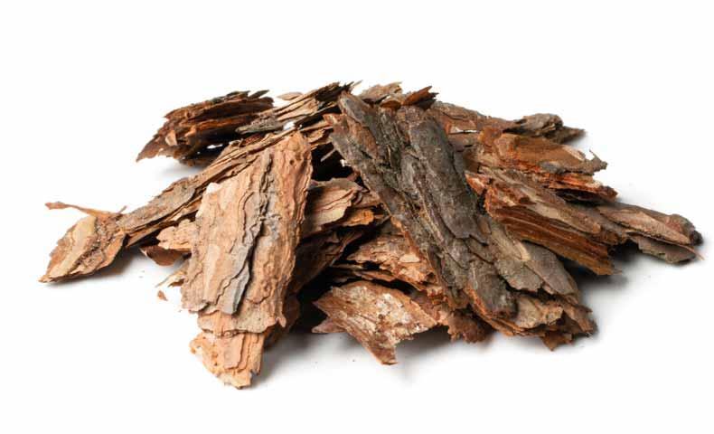 木の皮、樹皮