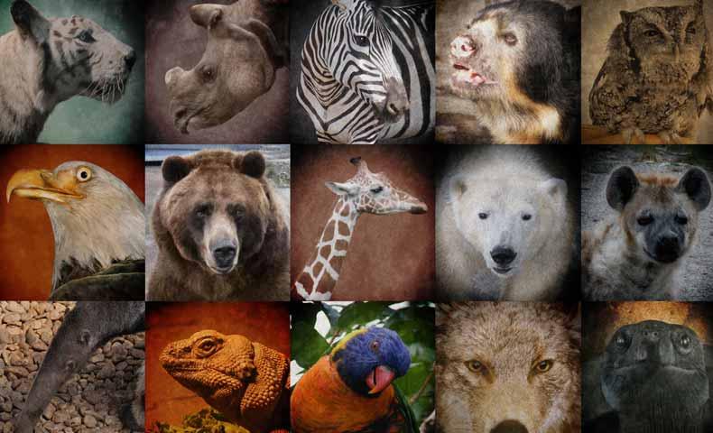 endangeredの意味と使い方