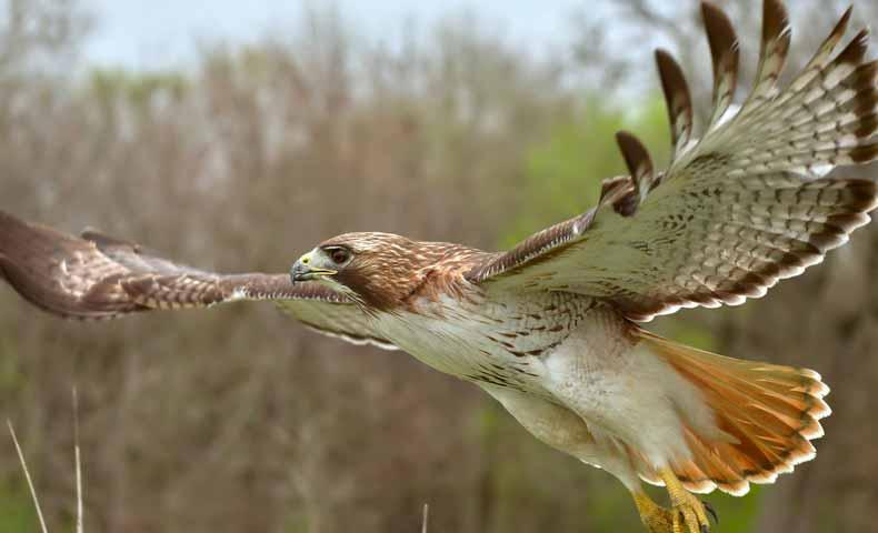 hawk(タカ・ホーク)の意味